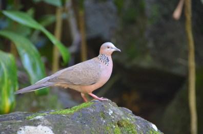 photo 1 Hawaii birds
