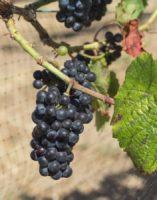 Hood Crest Winery-220