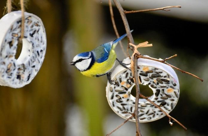 Mysterious Pneumonia Kills 11,000 Birds In Germany