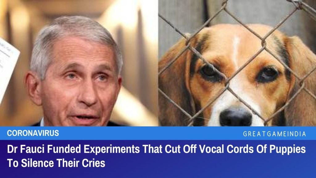 Dr. Fauci finanzierte Experimente, bei denen die Stimmbänder von Welpen abgeschnitten wurden, um sie zum Schweigen zu bringen