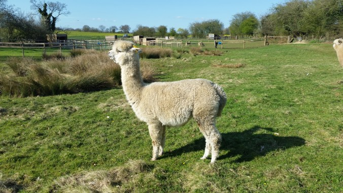 Toft Talini - quite a lady & she knows it!