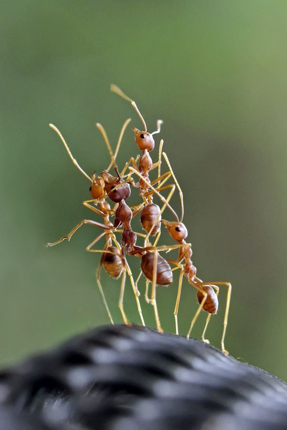 Awesome Ant Photography Great Inspire