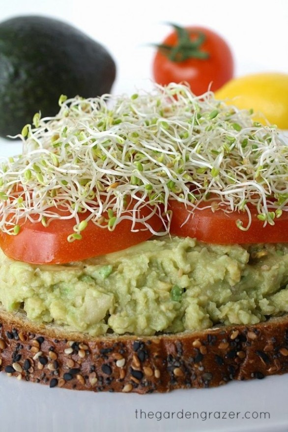 Chickpea Avocado Mash on Toast
