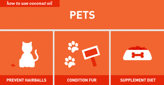 Surprising Ways to Use Coconut Oil: Pets
