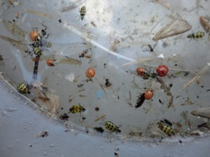 Eighty-five percent of plastic fragments collected were smaller than 0.2 inches--tinier than many insects. Image: Lorena Rios Mendoza