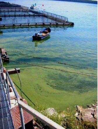 Algae growth around fish cages. Image: Georgian Bay Association.