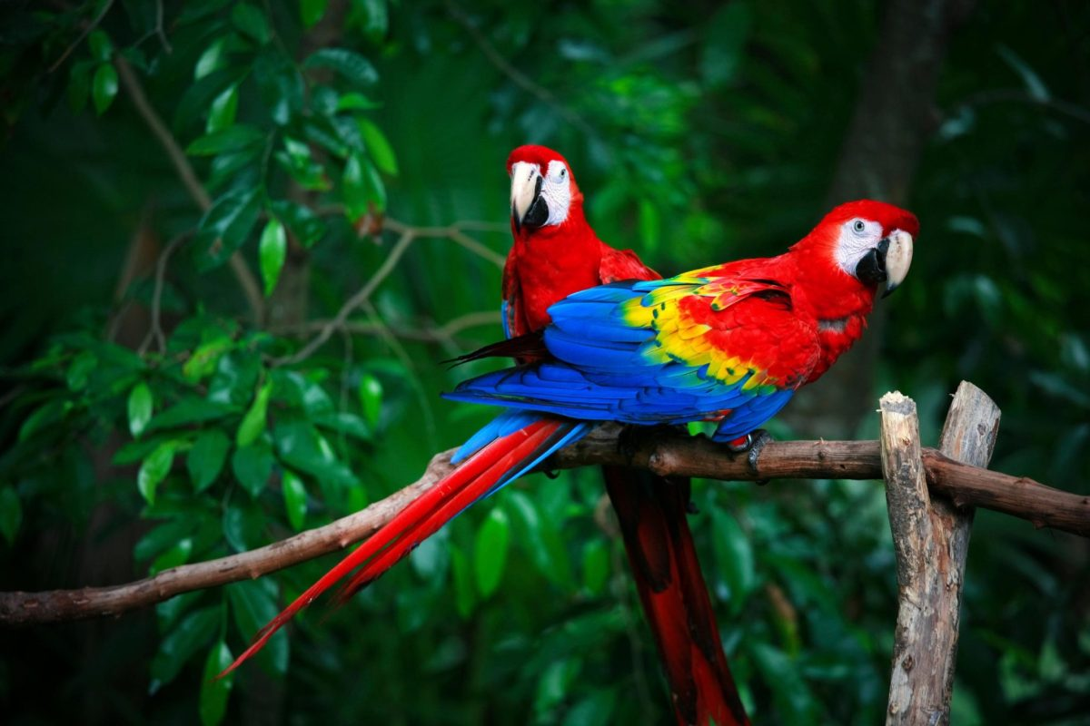 Alberta Neuroscientists Find Out Why Parrots Are Not so Bird-Brained