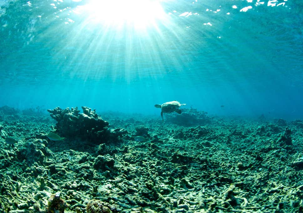 Ocean heat waves becoming more frequent and killing coral instantly
