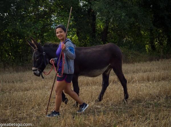 donkey-9272876
