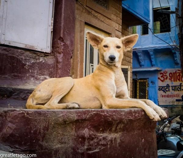 dog-125308