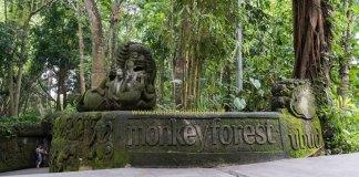 monkey forest tempat wisata murah bali