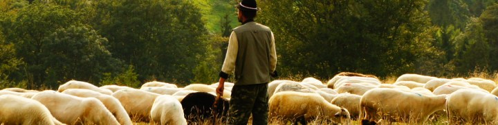 shepherd-watching-flock-1920x485