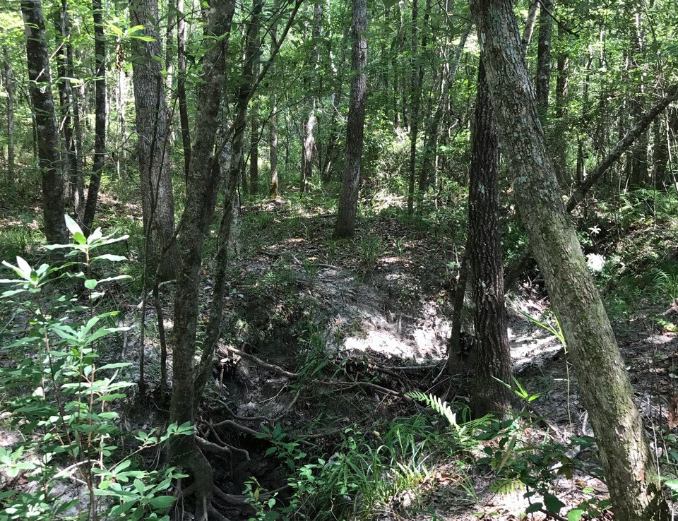 Bedgood Tract hunting land for sale in Alabama