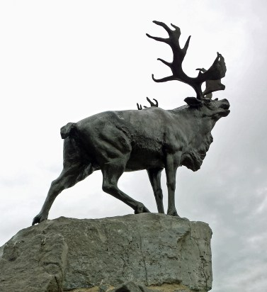 Newfoundland caribou facing the former foe with head thrown high in defiance