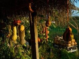 garden-Greece
