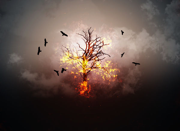 Burning branches – Photo © Rui Almeida Photography