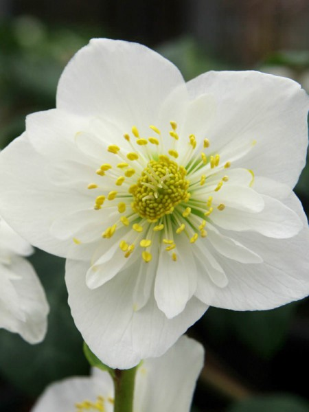 20 ancient greek myths about 20 ancient greek flowers