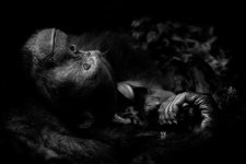 Contemplation-©-Peter-Delaney-Wildlife-Photographer-of-the-Year-800x534
