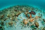 Crab-surprise-©-Justin-Gilligan-Wildlife-Photographer-of-the-Year-800x534
