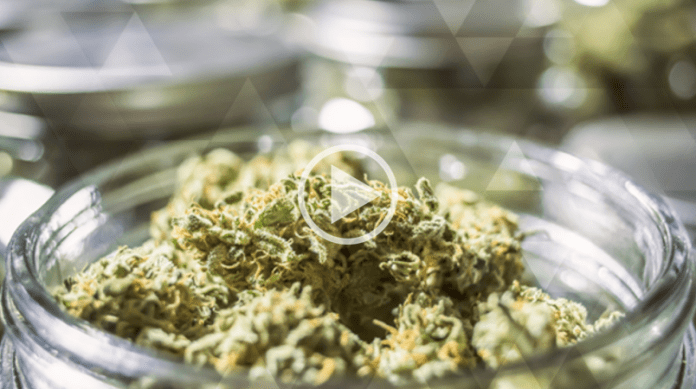 How to find your ideal cannabis dose