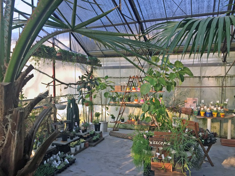 Greenhouse写真3