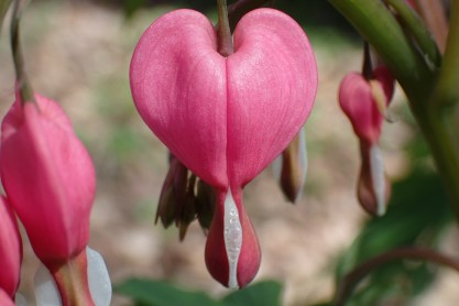 Nature-based Valentine's activities and crafts