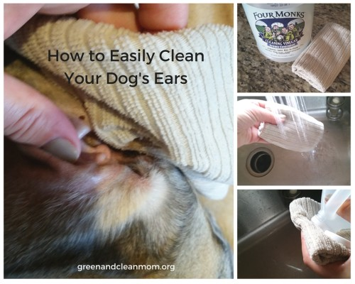 Make Solution To Clean Dog Ears