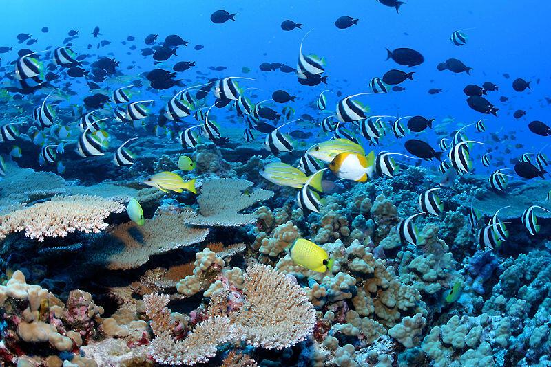Les poissons de récif peuvent voir des couleurs que les humains ne perçoivent pas