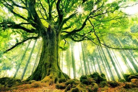 Les forêts valent cinq fois plus qu'ils ne coûtent
