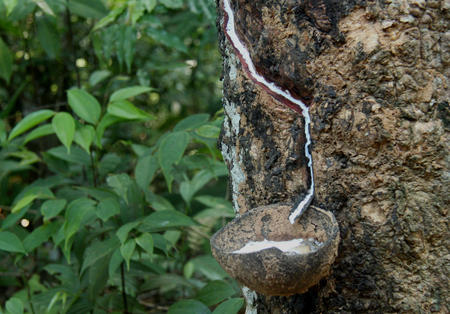 Rubber to energy, history is blurred in the Amazon