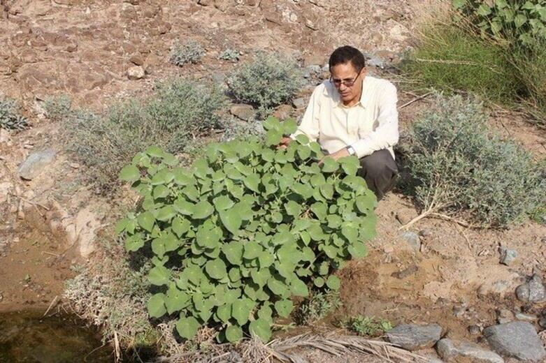 مختبر البيولوجيا الجزيئية في الشارقة… وحماية التراث النباتي الإماراتي