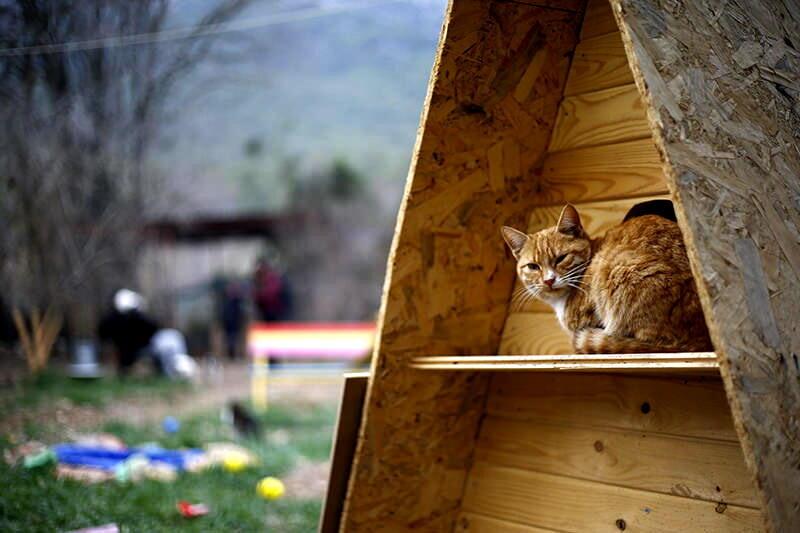 أنطاليا التركية تحتضن أول قرية للقطط في العالم