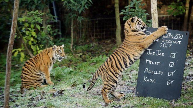 الإحصاء السنوي لحديقة الحيوان في لندن
