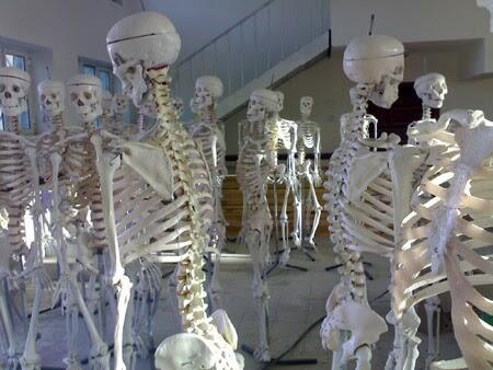عظام جسم الإنسان أقوى بخمس مرات من الفولاذ