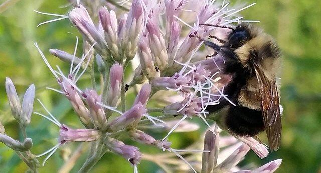 النحل يلعب كرة القدم !!