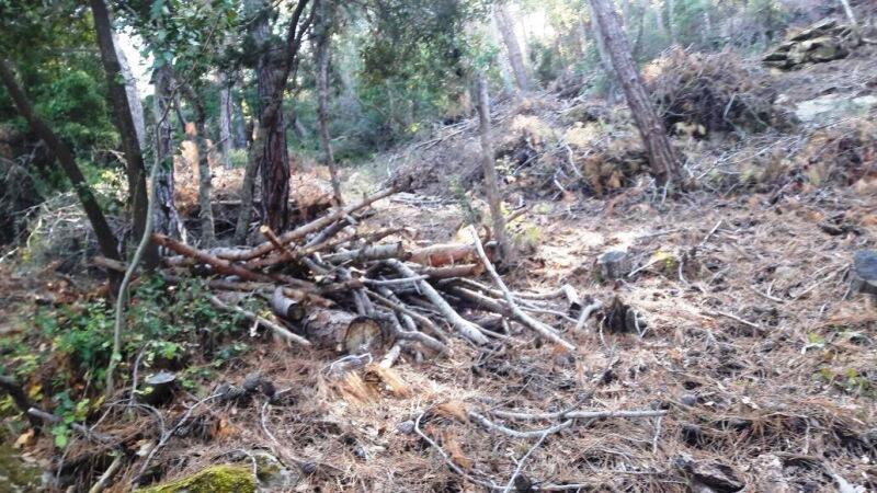 قطع أشجار وتعديات في حرج السفيرة الصنوبري في الضنية