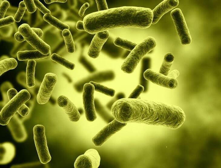 هناك نحو 40 ألف بكتيريا في فم الإنسان