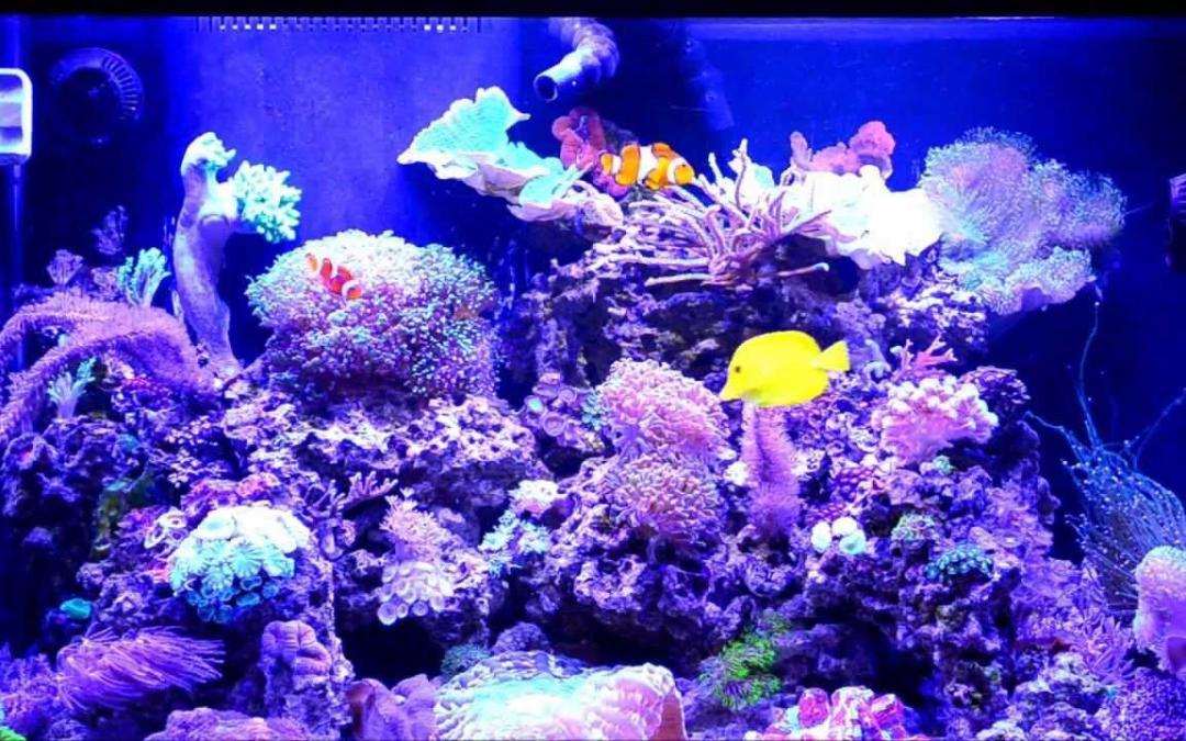 الشعب المرجانية الإصطناعية تتحدّى التغيّر المناخي