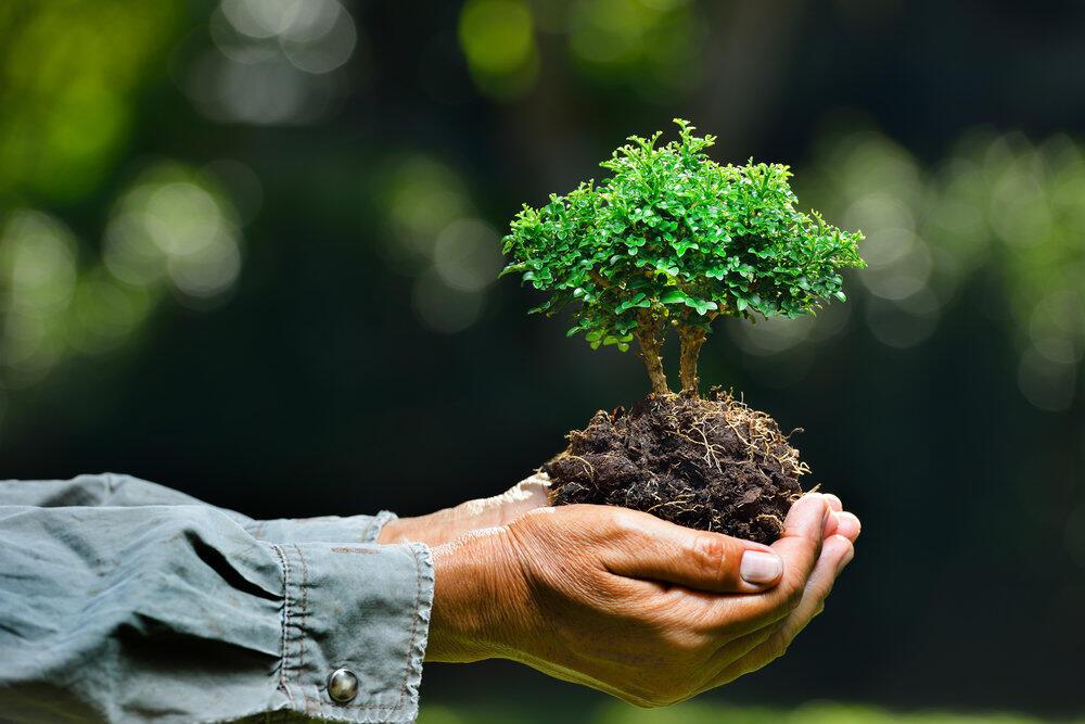 Ajouter votre article Rencontres vertes qui recherchent la conscience environnementale