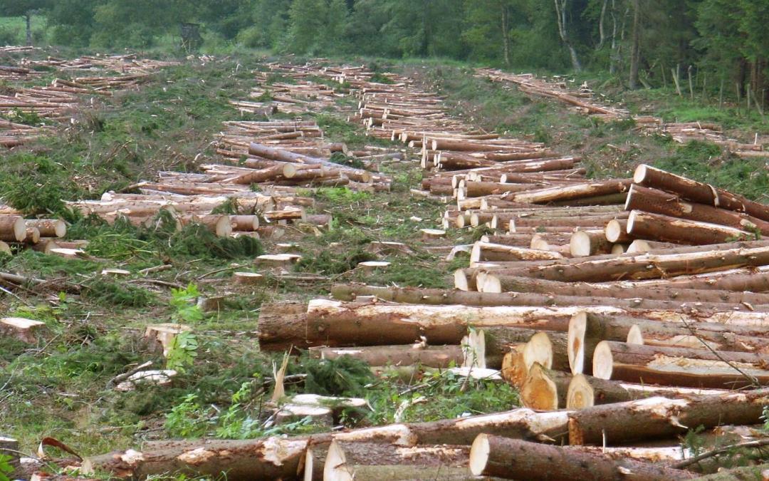 قطع الأشجار يسابق التضخم السكاني في العالم: رسالة بيئية للمؤسسات