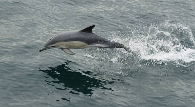 Baby dolphin crowded by beachgoers in Spain dies