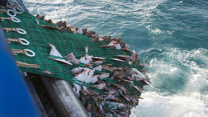 10 في المائة من صيد الأساطيل يعود إلى المحيط!
