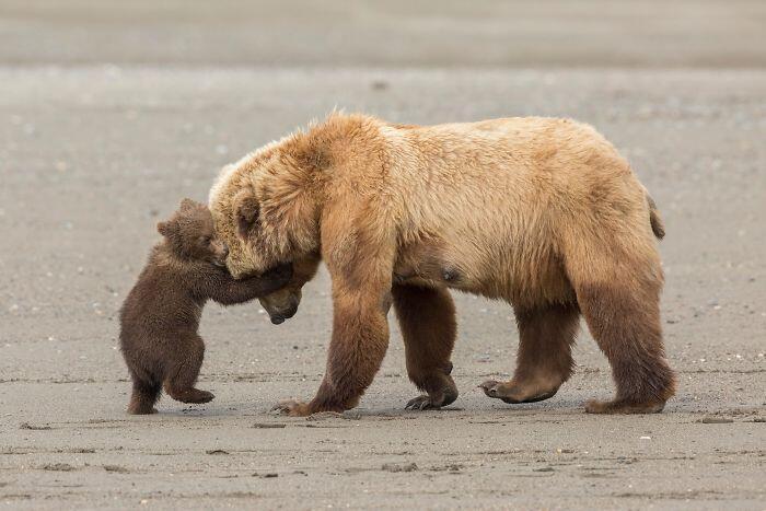 Las increíbles imágenes que postulan al premio de fotografía de vida salvaje
