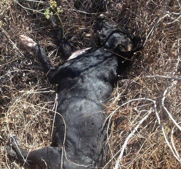 السلاح المتفلّت يستهدف كلاباً في جنوب الليطاني!