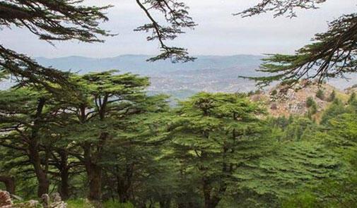 اليوم الوطني للبيئة في لبنان