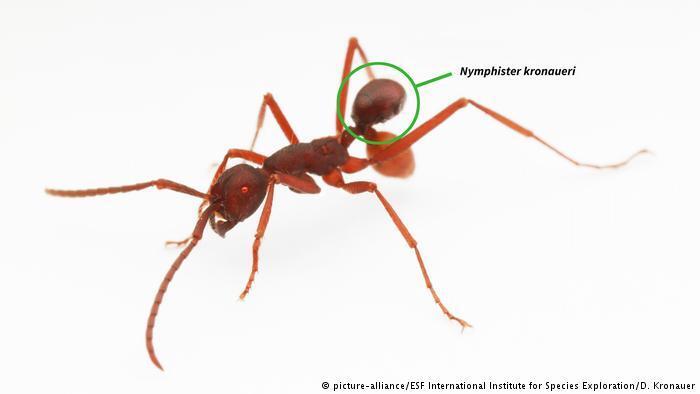 كائنات حية جديدة .. غنى للتنوّع البيولوجي