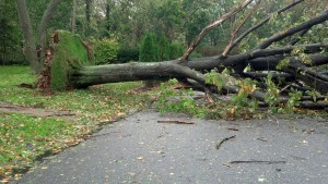 Downed Tree Across Street in Long Island, NY