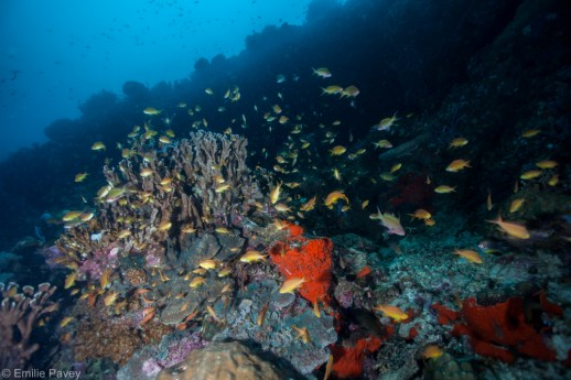 Coral reef Moalboal