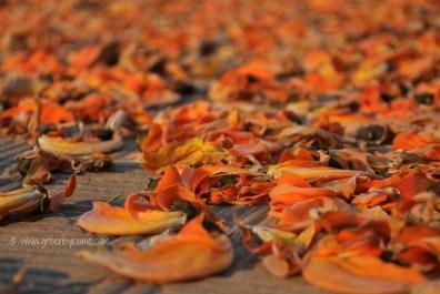 dryingflowerscr.jpg