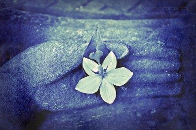 cyanotyperg310flowerstoneCR